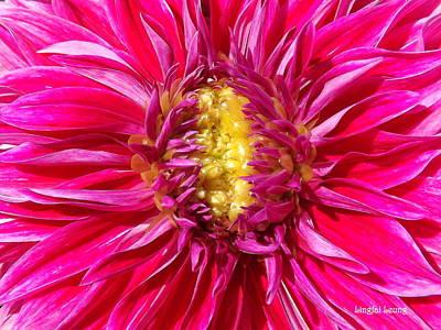 Photograph - Pink Dahlia Infusion Fantasy by Lingfai Leung