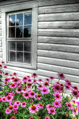 Photograph - Pink Daisies by Randy Pollard