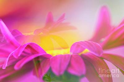 Abstract Flowers Royalty-Free and Rights-Managed Images - Pink Daisies by Veikko Suikkanen