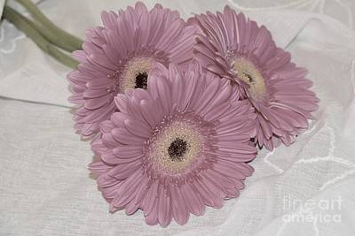 Photograph - Pink Daisy Petals by Jeannie Rhode
