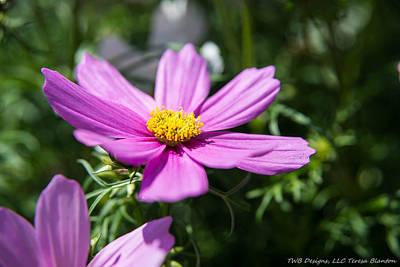 Photograph - Pink Daisy by Teresa Blanton