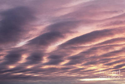 Photograph - Pink Day Sky by Donna Munro