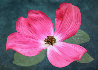 Digital Art - Pink Dogwood Blossom #2 by Bill Johnson