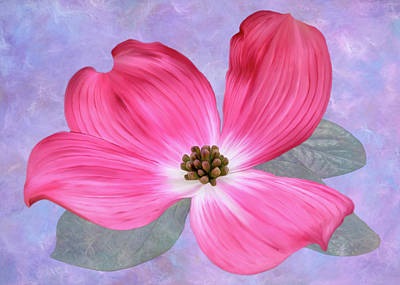 Digital Art - Pink Dogwood Blossom #3 by Bill Johnson