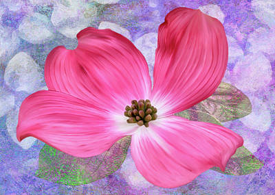 Digital Art - Pink Dogwood Blossom #4 by Bill Johnson
