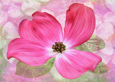 Digital Art - Pink Dogwood Blossom #5 by Bill Johnson