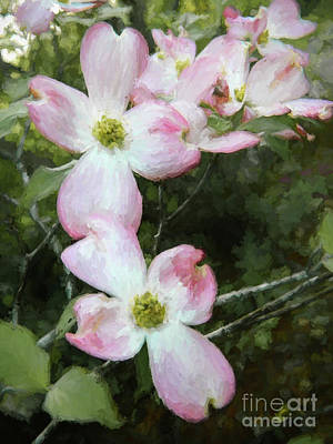 Photograph - Pink Dogwood - Bring On Spring Series by Andrea Anderegg