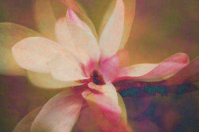 Photograph - Pink Dogwood Dream by Suzanne Powers