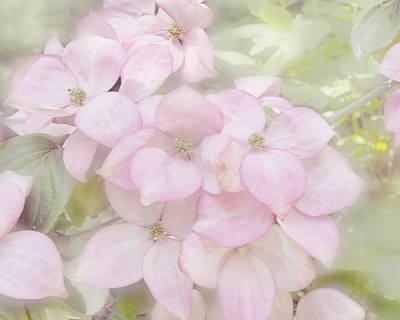 Photograph - Pink Dogwoods by Gigi Ebert
