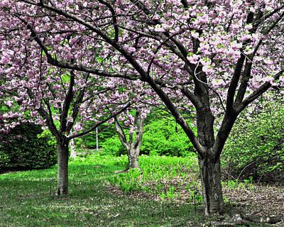 Photograph - Pink Dogwoods by Marty Koch