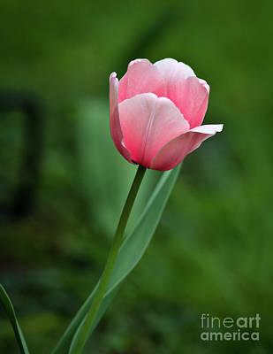Photograph - Pink by Douglas Stucky