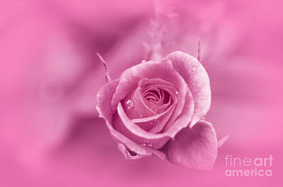 Photograph - Pink Dream by Charuhas Images