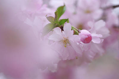 Photograph - Pink Dream. Spring Pastels by Jenny Rainbow