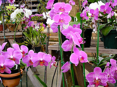 Orchids Photograph - Pink Dreams Orchidaceae by Dora Miller