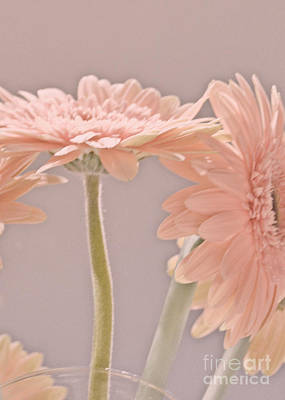 Photograph - Pink Dreams by Traci Cottingham