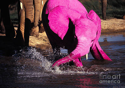 Photograph - Pink Elephant by Warren Sarle