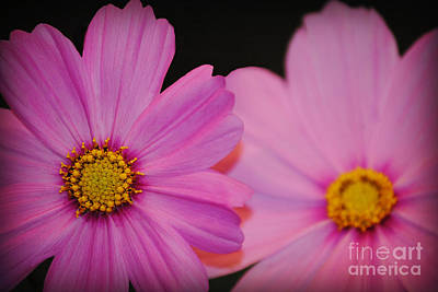 Photograph - Pink by Eric Liller