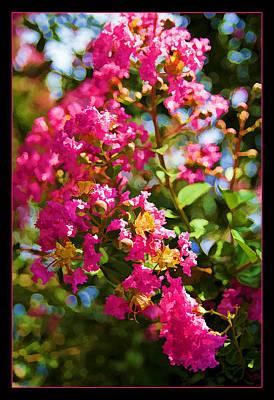 Photograph - Pink Explosion by Ricky Barnard