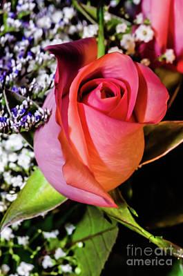 Photograph - Pink Eye Rose by Gerald Kloss