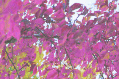 Digital Art - Pink Fall Branches by Donna Munro