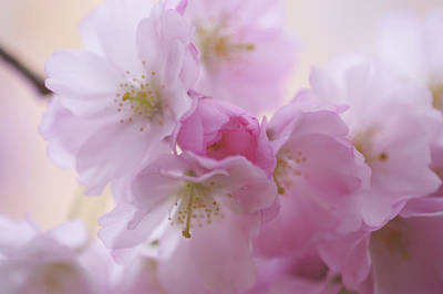Photograph - Pink Family. Spring Pastels by Jenny Rainbow