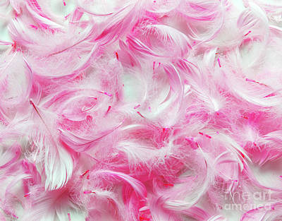 Pink Feathers Background Art Print