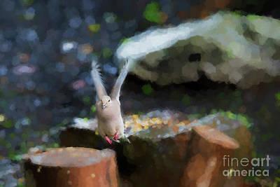 Photograph - Pink Feet by Dan Friend