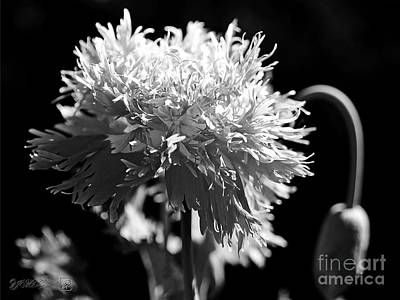 Photograph - Pink Fizz In Black And White by J McCombie