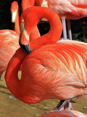 Photograph - Pink Flamingo 2 by Inspirational Photo Creations Audrey Taylor