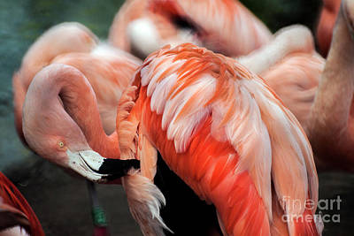 Photograph - Pink Flamingo by Doc Braham