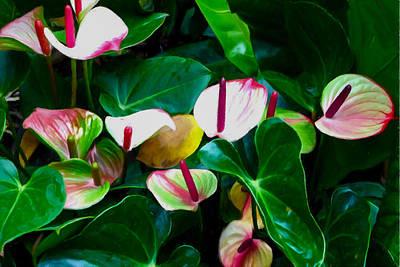 Pink Flamingo Flower 5 Art Print