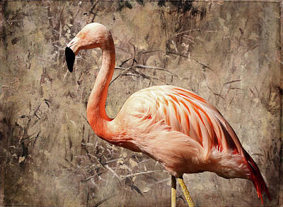 Photograph - Pink Flamingo by Judy Vincent
