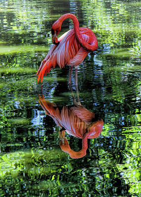 Digital Art - Pink Flamingo by OLena Art Brand
