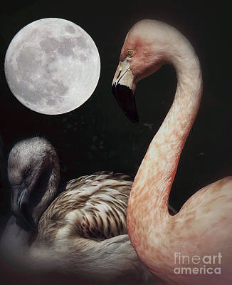 Photograph - Pink Flamingo Moon 2 by Toma Caul