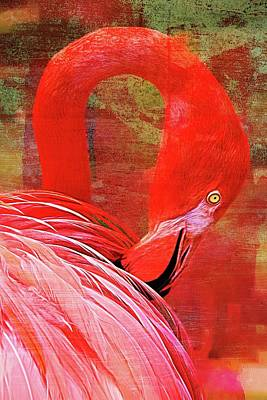 Photograph - Pink Flamingo Preens by Alice Gipson