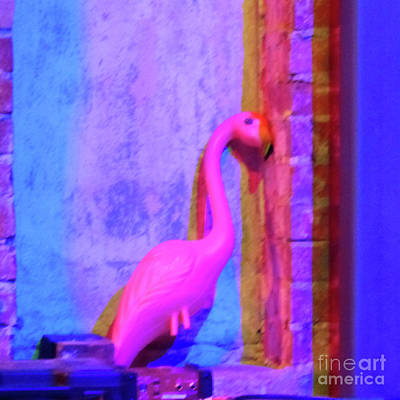 Photograph - Pink Flamingo by Rosanne Licciardi