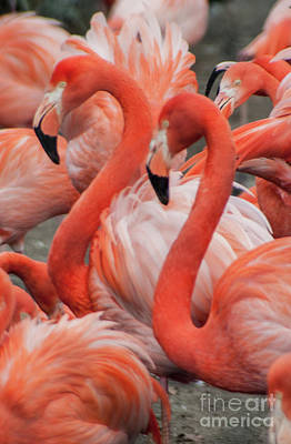 Photograph - Pink Flamingo's by Doc Braham