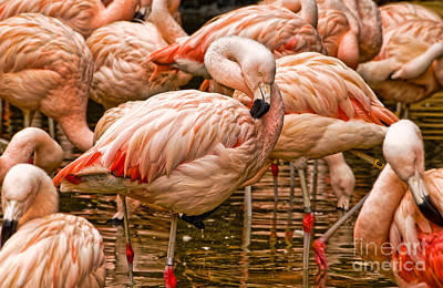 Photograph - Pink Flamingos by Kathleen K Parker