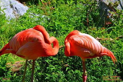 Photograph - Pink Flamingos by Lisa Wooten