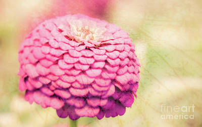 Photograph - Pink Floral by Andrea Anderegg
