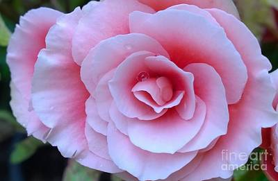 Photograph - Pink Floral Beauty by Jennifer E Doll