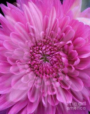 Photograph - Pink Floral Overlay by Joan-Violet Stretch