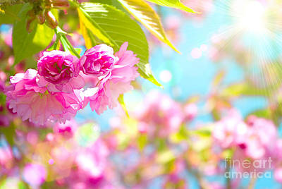 Pink  Flower Beautiful Art Print by Boon Mee