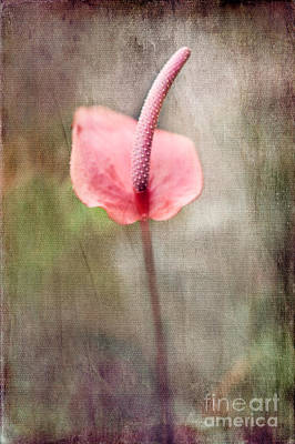Photograph - Pink Flower Canvas Mirrored Match by Alissa Beth Photography