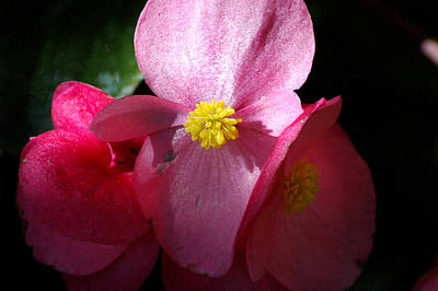 Photograph - Pink Flower by David Weeks