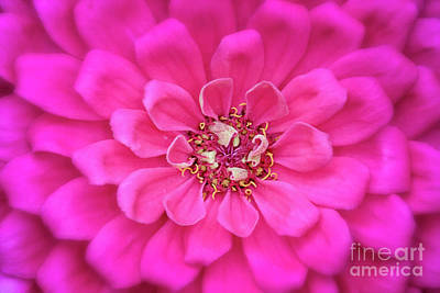 Royalty-Free and Rights-Managed Images - Pink Flower III by Todd Bielby