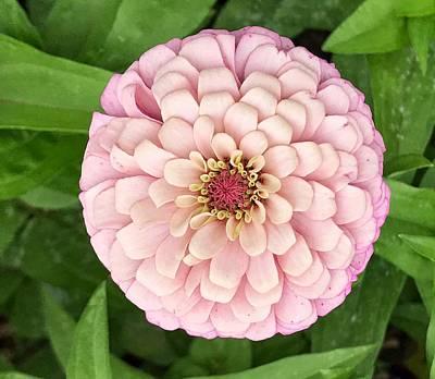 Photograph - Pink Flower by Jack Nevitt