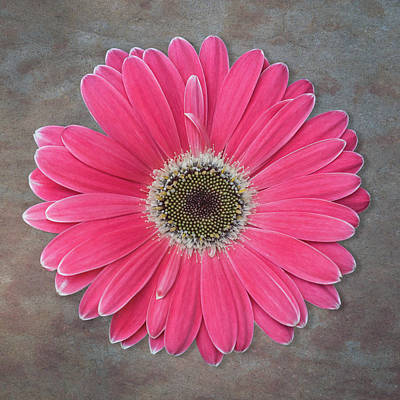 Photograph - Pink Flower by Patti Deters