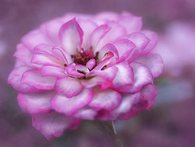 Photograph - Pink Flower by Rick Mosher