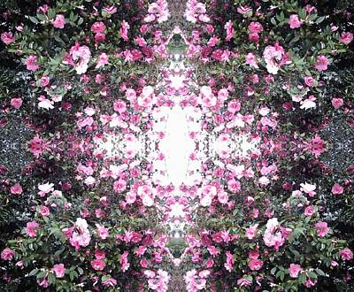 Photograph - Pink Flower Sky Window by Julia Woodman
